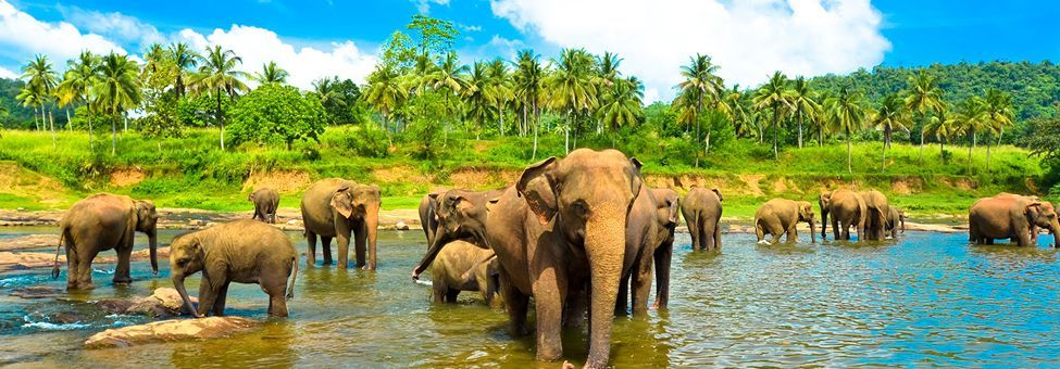 SRI LANKA TOUR PACK 7 NIGHTS / 8 DAYS